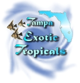 Return to Tampa Exotic Tropicals
